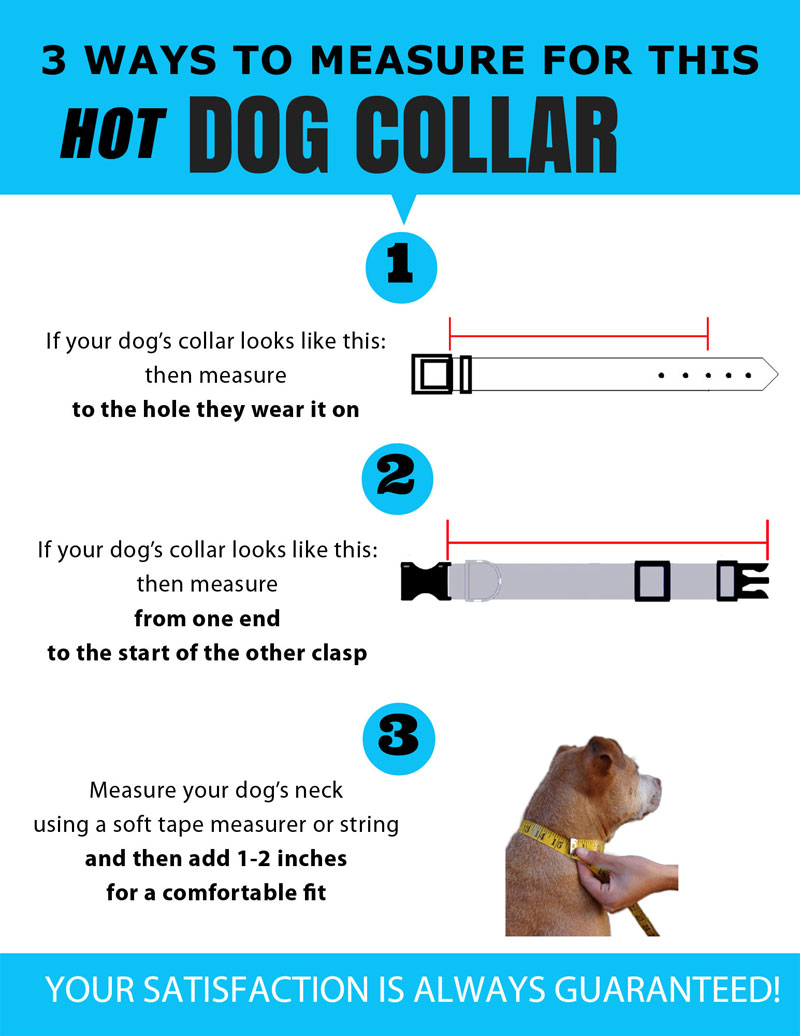 size your dog collar