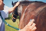 What Is Your Equine Emergency Plan?