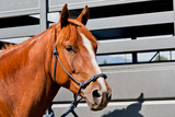 15 Tips For Travelling Your Horse