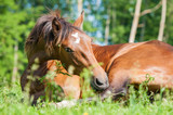 10 Steps to Managing Your Horse with Colic