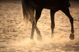 Regenerative Therapy For Equine Athletes