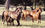 Preparing Your Dry Mare This Breeding Season