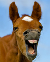 Five Tips For Preparing For The Foaling Season
