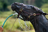 Heat Stress - Training And Competing In The Warmer Months