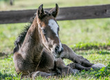 Eight Characteristics of Normal Foal Behaviour