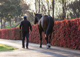 Preparing Your Stallion For The Breeding Season