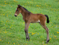 New Foal On The Way? Why You Need A Foal Health Check