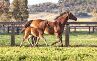 Angular Limb Deformities and Associated Problems in Young and Developing Foals