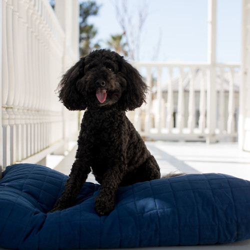 Buddy Pet Bed by Brolly Sheets