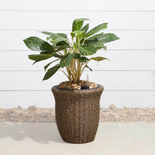 Artificial plant in woven pot