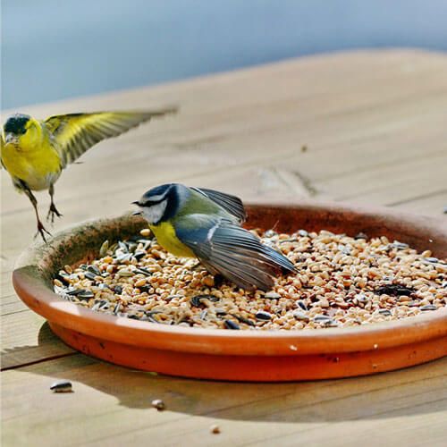 Bird cage dish