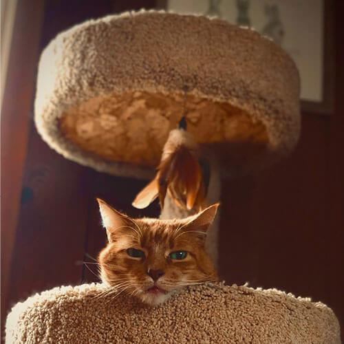 Cat in tree climber