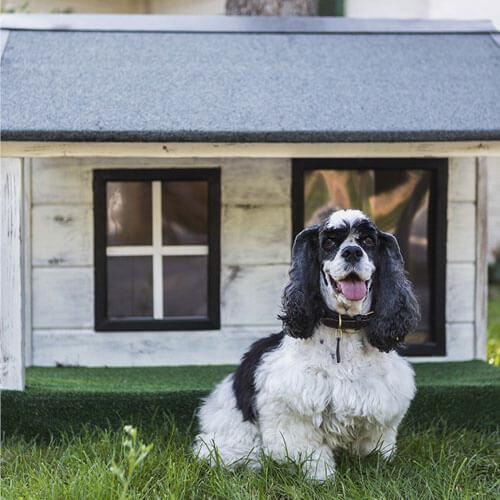 Dog & dog house