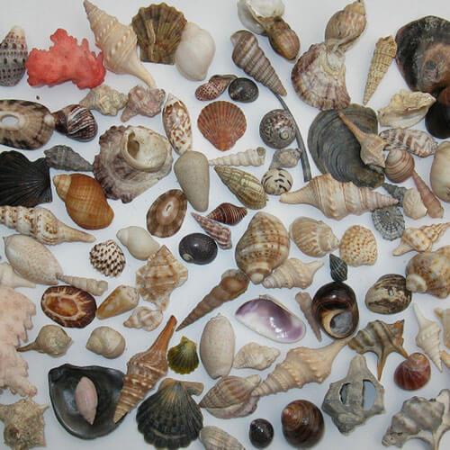Aquarium sea shells