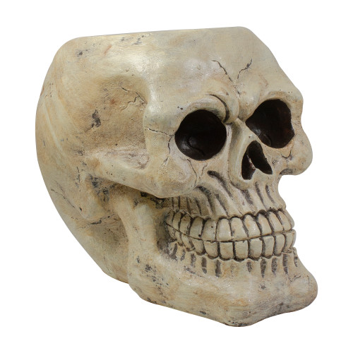 """11"""" Ivory and Black Halloween Skull Tabletop Decoration"""