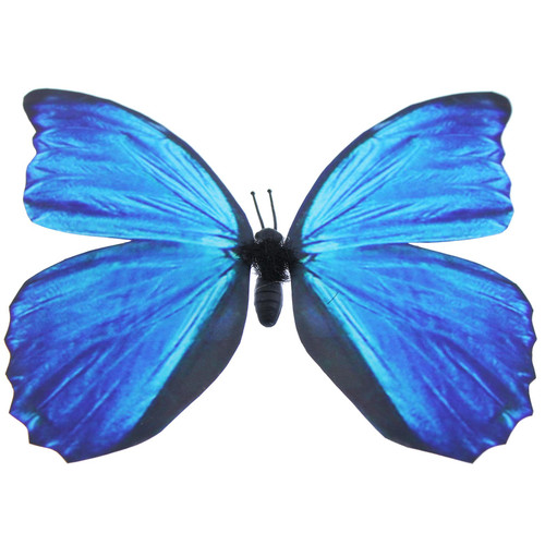 Blue Morpho Butterfly Magnet With Bonus Butterfly on Card
