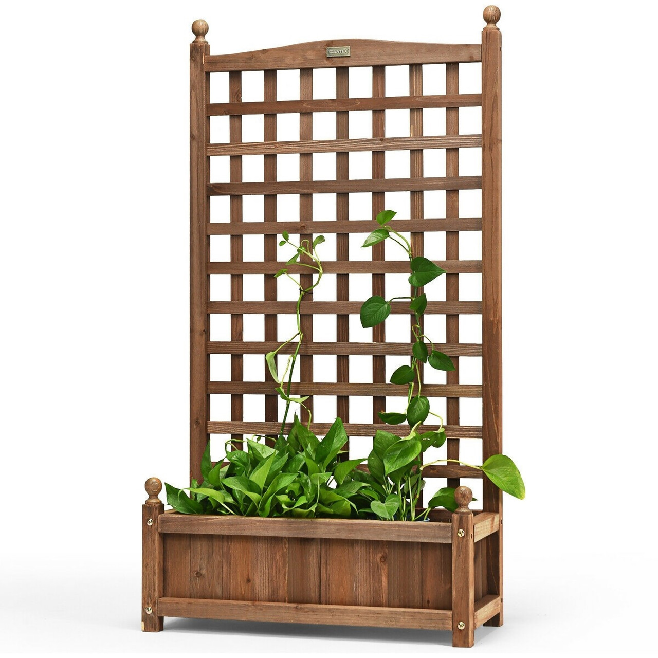 Solid Fir Wood Planter Box with Attached Trellis