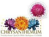 Chrysanthemum Digital Color Postmark