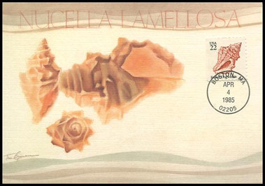 2117 - 2121 / 22c Seashells Set of 5 Fleetwood 1985 Maximum Card