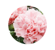 Tips To Keep Your Flowers Lasting Longer