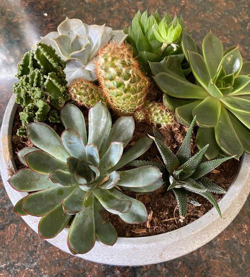 Cactus / Succulent Garden