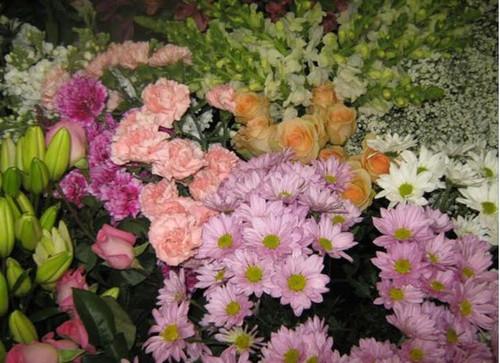 Florist Choice (Large)