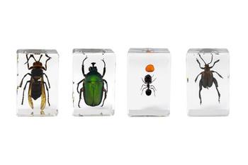Celestron 3D Bug Specimen Kit #5