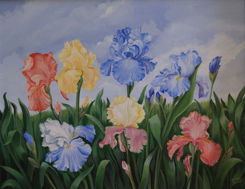 Spring Blooms on the Iris Bright colorful stretched canvas giclee print 18x24