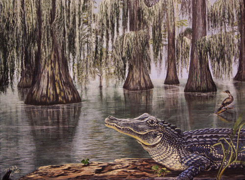 The Louisiana Alligator loves to sunbath in the swamp, bayou or along the lake shore.  The cool colors in this 12x16 painting adds a Cajun atmosphere to any room.