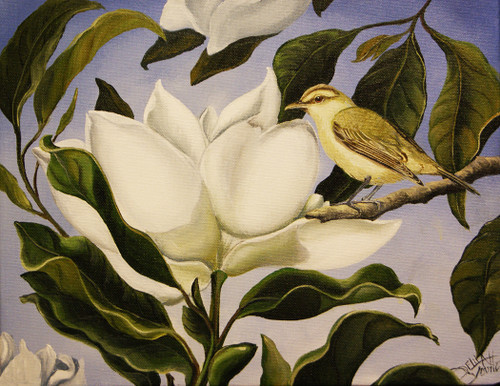 The Magnolia tree is decorated with beautiful flowers and sometimes is home to the Red Eyed Vireo.  They make a visually appealing pair in this 11x14 original painting.