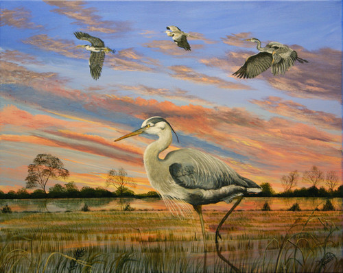 The Great Blue Heron graces the fields of Louisiana and it's elegance adds calmness to the end of any day.  16x20