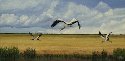 """The Wood Stork is classified as""""threatened"""" by U.S. Fish and wildlife department.  Once a year we may see them on the road I live on in Louisiana.  This landscape of rice fields was the perfect setting for these birds that look so elegant when they fly overhead. This stretch giclee canvas print is 10x20."""