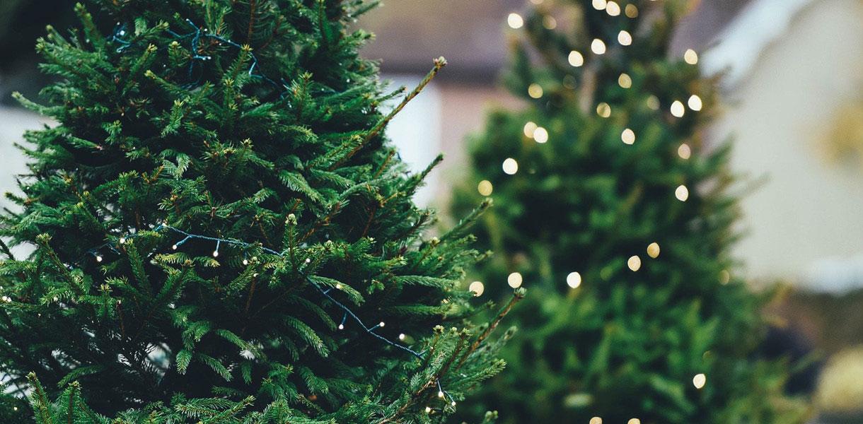 Northlight Seasonal Artificial Christmas Trees