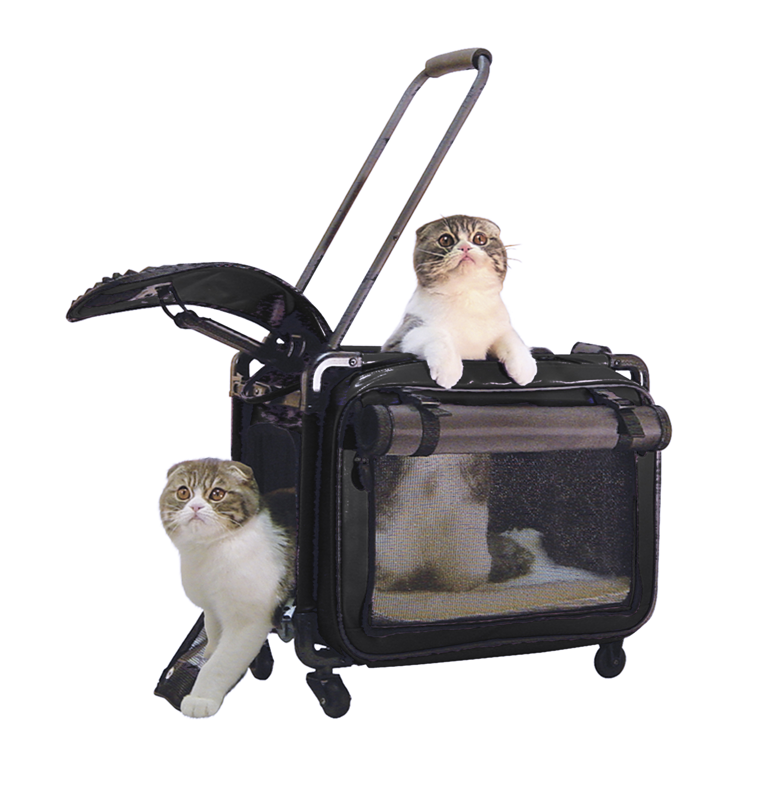 2021 Tutto Pet Carrier Product Review
