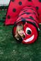 Ladybug Tent + Tunnel Play Combo