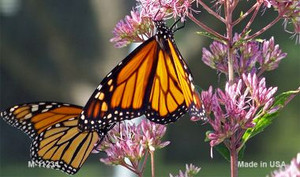Butterfly - Monarch On Flower Novelty Wholesale Magnet