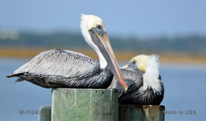 Pelican - Two On Pier Novelty Wholesale Magnet M-11240