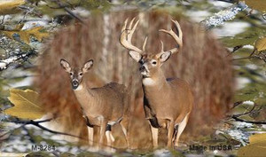 Two Deer on Camo Wholesale Novelty Metal Magnet M-8284