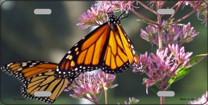 Butterfly - Monarch On Flower License Plate Novelty Metal Wholesale
