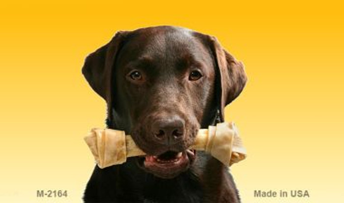 Chocolate Lab Wholesale Magnet M-2164