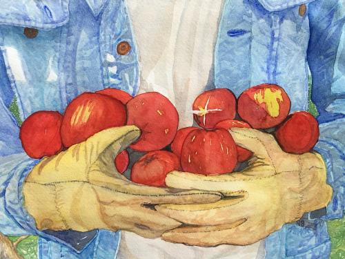 AC-937  Denim Apples by  Don Rehorn