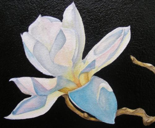N-924 White Magnolia