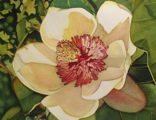 SAC-N-950 Magnolia 2