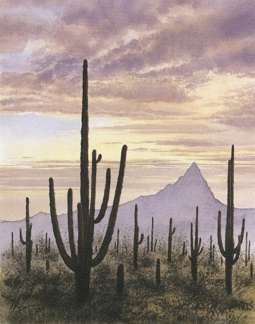 N-471 Desert Sunset by D. Stouffer