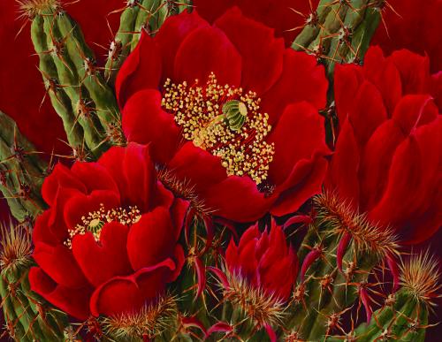 N-594 Red Buckhorn Beauties by Beth Zink