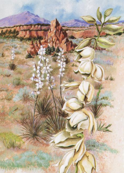 AC-870 When the Desert Blooms El Malpais by Skeeter Leard