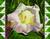 N-536 Datura by Skeeter Leard