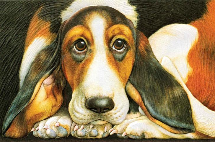 basset hound sympathy blank greeting card