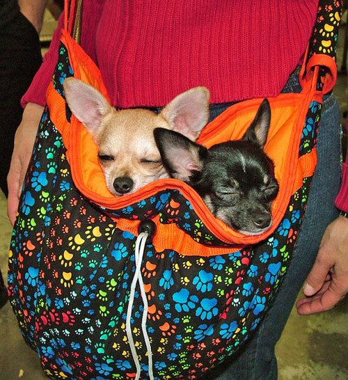 Take-Along Dog Carrier Bag