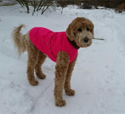Water-Resistant Dog Raincoat